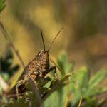 Auf Augenhöhe mit Libellen, Heuschrecken & Co.