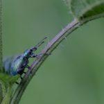 Neues aus der Insektenwelt – wenn wir erklimmen…